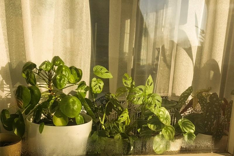 okno jungle